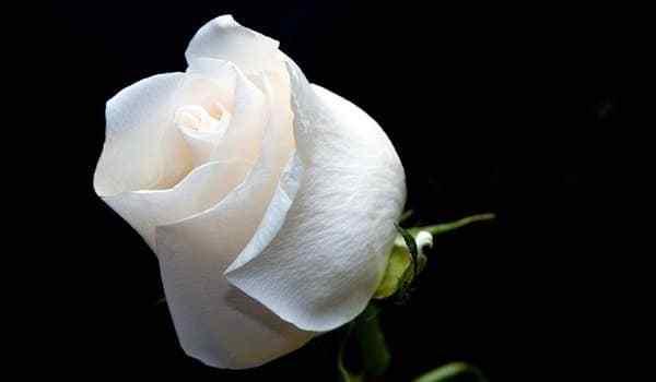 Белый приворот - без последствий и греха