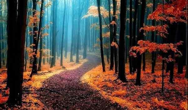 Таинственные леса мира