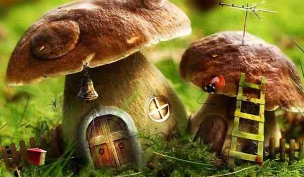 Dream interpretation, what is the dream of mushrooms: collect mushrooms, mushrooms in a dream to a woman