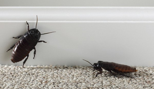 Dream interpretation, why dream of cockroaches: a woman, a man, live cockroaches in a dream