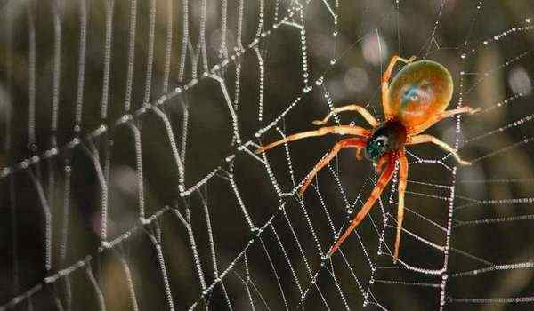 Dream Interpretation, what do spiders dream about: big spiders, many spiders in a dream