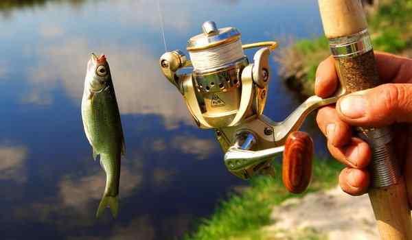 Dream book, what dreams of fish: a woman, a man, a live fish in a dream