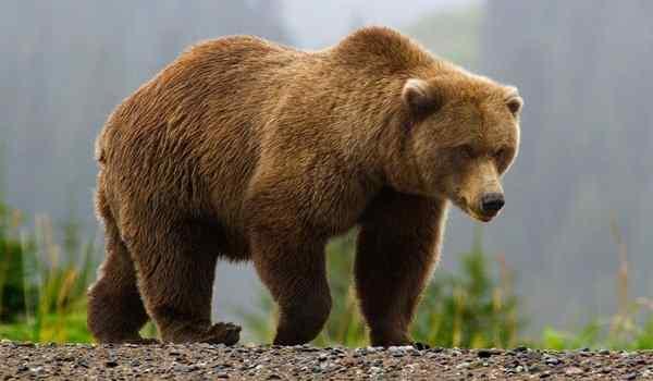 Dream interpretation, what dreams of a bear: a man, a woman, a polar bear in a dream