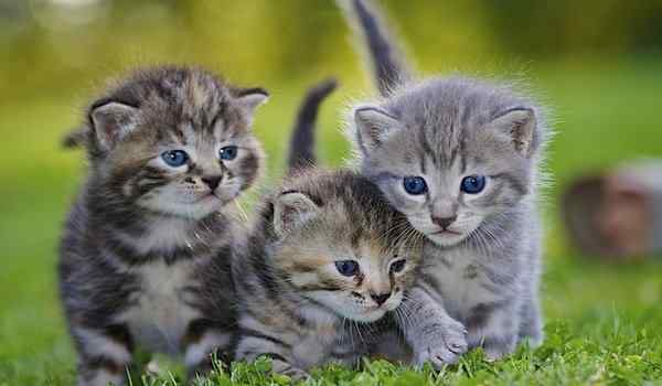 Dream interpretation, what dream of kittens: small, red, kittens in a dream to a woman