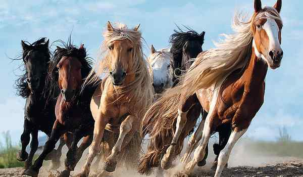 Dream book, why dream of a horse: a man, a woman, a white horse in a dream