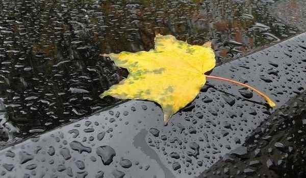 Dream interpretation, what dreams of rain: strong, warm, get under the rain in a dream