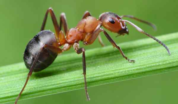 Dream Interpretation, what ants dream of a woman, ants in large numbers in a dream