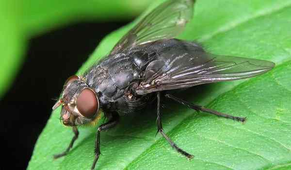 Dream interpretation, what dreams of flies: a lot, in the house, flies in a dream to a woman