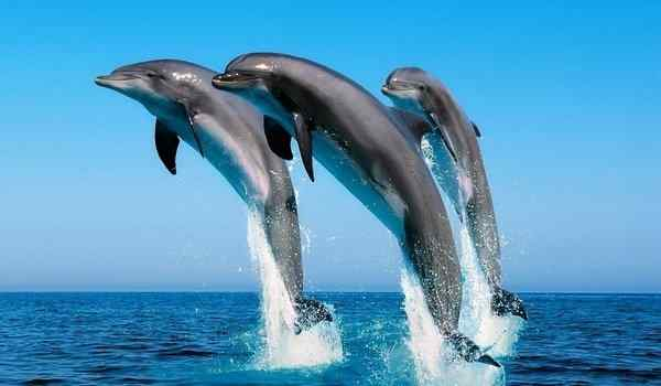 Dream interpretation, what dreams of dolphins woman, many dolphins in a dream