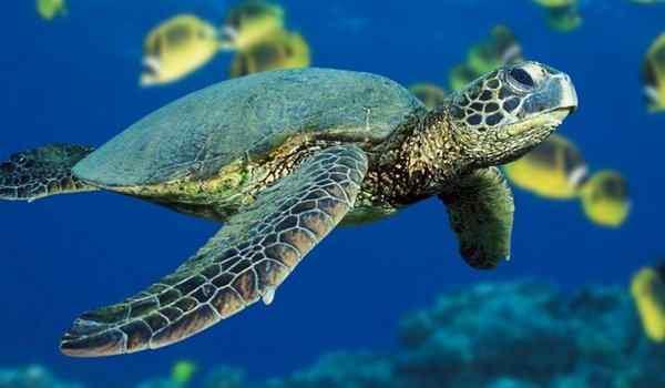 Dream Interpretation, what a turtle dream of a woman, a lot of turtles in a dream
