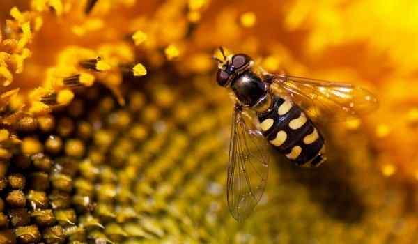 Dream interpretation, why dream wasps: many wasps, wasp sting in a dream