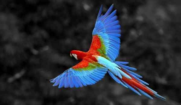 Dream interpretation, what dreams of a parrot: a wavy, large, a parrot in a dream to a woman