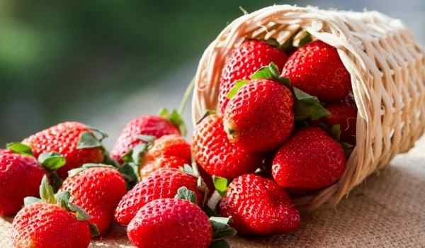 Dream interpretation, what dreams of strawberries: big, red, strawberries in a dream in the garden