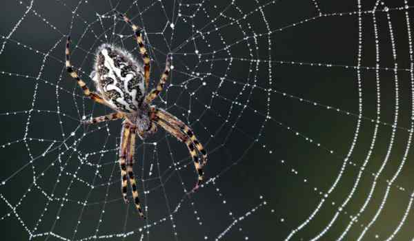 Dream interpretation, what dreams of the web: black, white, spiders and cobwebs in a dream