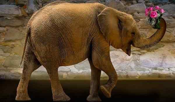Dream interpretation, what dream of an elephant: a woman, a man, a big elephant in a dream