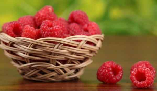 Dream interpretation, what dreams raspberries: red, large, collect raspberries in a dream