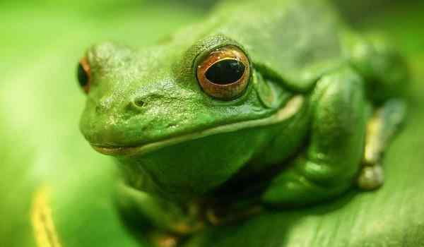 Dream interpretation, what is the dream of a toad: a big, green, toad in a dream to a woman