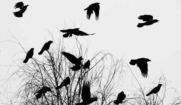 Dream interpretation, what the crow dreams: black, dead, crow outside the window in a dream