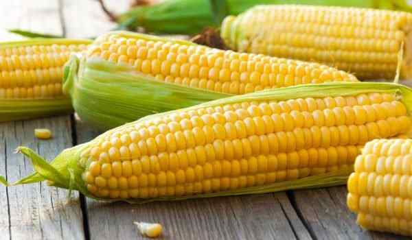 Dream interpretation, what dreams of corn: boiled, on the cob, a lot of corn in a dream