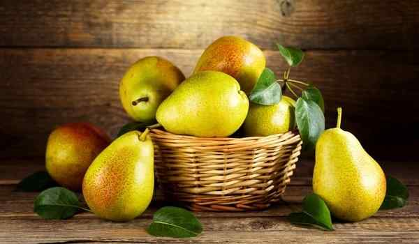 What dreams of pears: big, ripe, pears on a tree in a dream