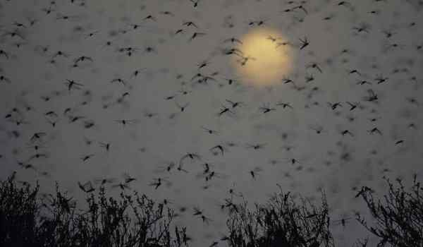 What do mosquitoes dream about: in large quantities, many, mosquitoes bite in a dream