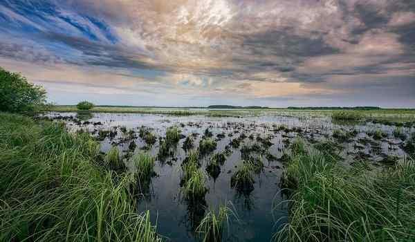 Снится болото с тиной