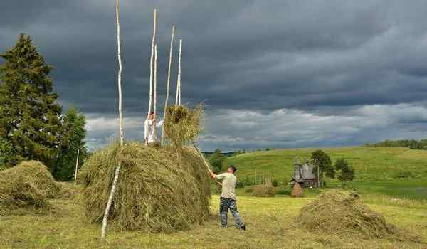 What dreams of hay: dry, baled, rowing hay in a dream