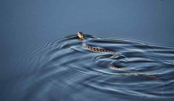 Why dream too: a woman, big, a lot of snakes in a dream
