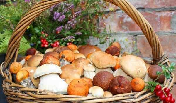 Увидеть во сне разные грибы