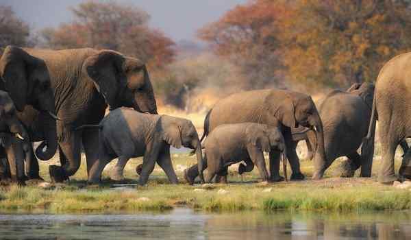 Приснилось стадо слонов