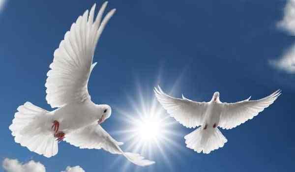 К чему снятся белые летающие голуби
