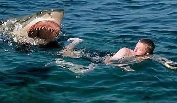 Снится, что акула нападает