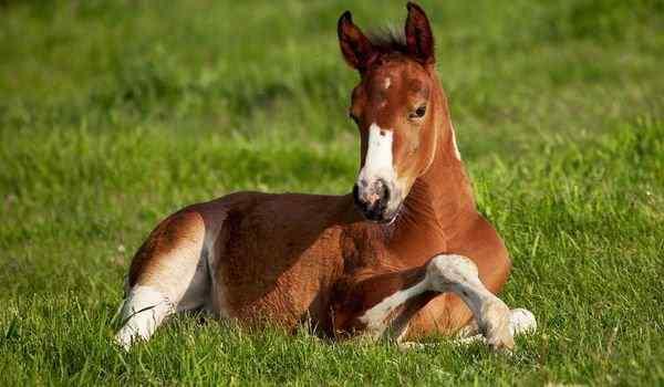 К чему снится молодой конь