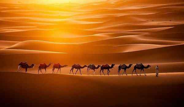 Приснился караван верблюдов
